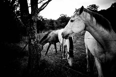 Horses - Nooitgedacht Original