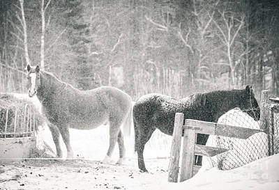 Forelock Photograph - Horses Of Olde by Cheryl Baxter