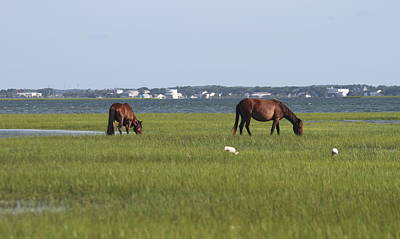 Wild Bird Photograph - Horses Of Shackleford Banks 2014 3 by Cathy Lindsey