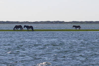 Horses Of Shackleford Banks 2014 Art Print by Cathy Lindsey
