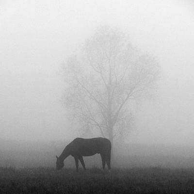 Jouko Lehto Royalty-Free and Rights-Managed Images - Horses of the Fall  bw by Jouko Lehto