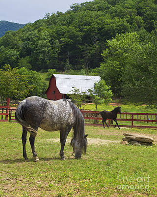 Photograph - Horses On A Farm by Jill Lang