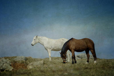 Horses On A Hill Art Print by Kathy Jennings