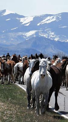 Horses On Road Art Print