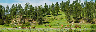 Horses On Roundup, Billings, Montana Art Print by Panoramic Images