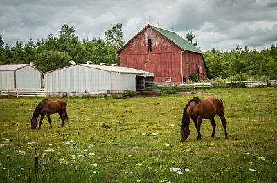 Photograph - Horses On The Farm by Gene Sherrill