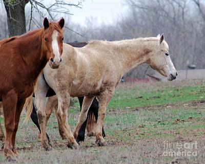 Photograph - Horses On The Farm by Mark McReynolds