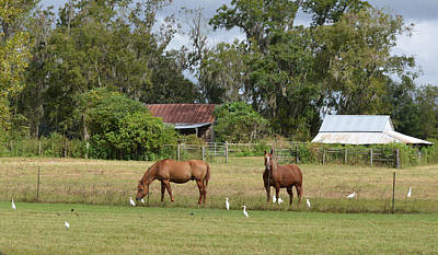 Photograph - Horses On The Farm by rd Erickson