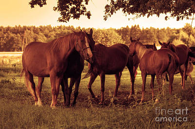 Animal Photograph - Horses On The Field by Michal Bednarek