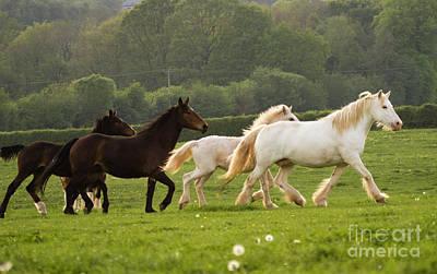 Horses On The Meadow Print by Angel  Tarantella