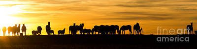 Photograph - Horses Panorama by Jim McCain