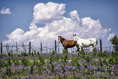 Animals Royalty-Free and Rights-Managed Images - Horses Posing in Texas Bluebonnets by Priscilla Burgers