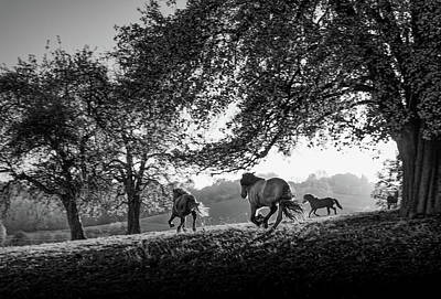 Horses Running At Sunset, Baden Art Print