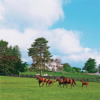Photograph - Horses Running Through Pasture by Durston Saylor