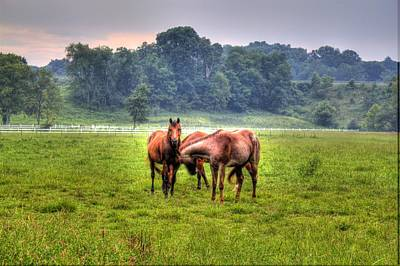 Photograph - Horses Socialize by Jonny D