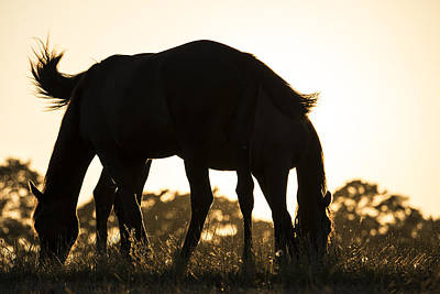 Photograph - Horses Sunset by Michael Mogensen