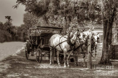 Photograph - Horses Waiting For Driver by Dan Friend