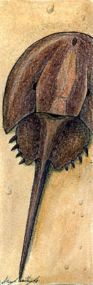 Drawing - Horseshoe Crab by Sheryl Westleigh