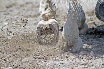 Western Pleasure Horse Photograph - Horseshoes by Michela Villa