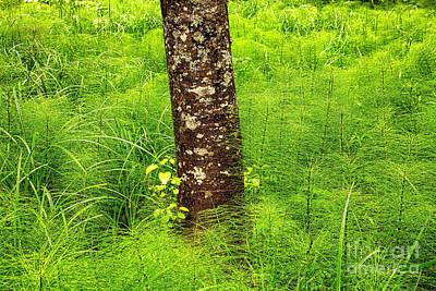 Photograph - Horsetail And Alder by Stuart Gordon