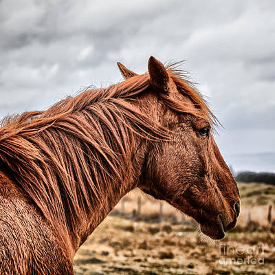 Animals Photograph - Horsey Horsey by John Farnan