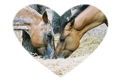 Photograph - Horsey Love Blitzen And Tina by Cindy New