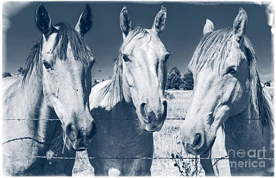 Animals Royalty-Free and Rights-Managed Images - Horsing Around by Edward Fielding