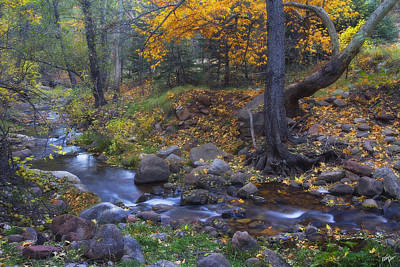 Horton Creek Autumn Art Print by Peter Coskun