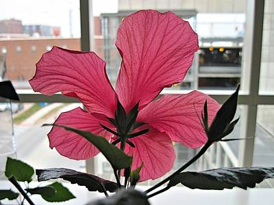Digital Art - Hospital Hibiscus by Doug Morgan