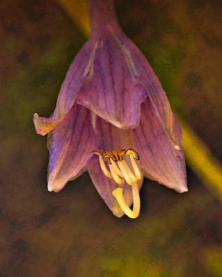 Photograph - Hosta Flower by Kasandra Sproson