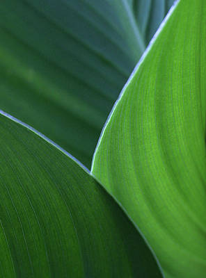 Hosta Leaf Abstract Art Print
