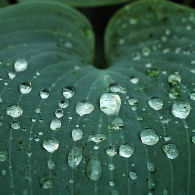 Hosta Leaf With Dew Art Print