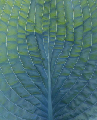 Photograph - Hosta by Leah Palmer