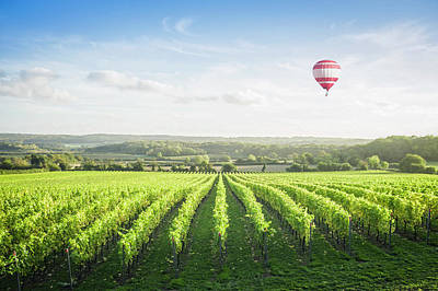 Photograph - Hot Air Balloon Floating Over Vineyard by Jacobs Stock Photography Ltd