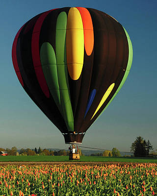 Hot Air Balloon, Tulip Festival Art Print by Michel Hersen