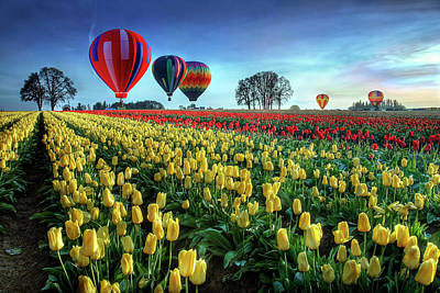 Hot Air Balloons Over Tulip Field Art Print