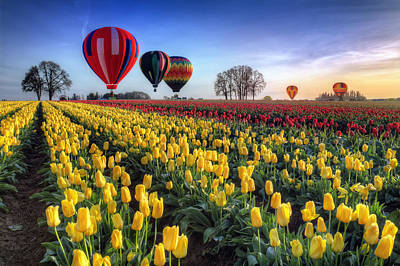 Print featuring the photograph Hot Air Balloons Over Tulip Fields by William Lee