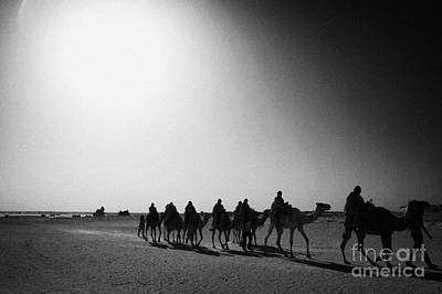 hot desert sun beating down on camel train in the sahara desert at Douz Tunisia Art Print by Joe Fox