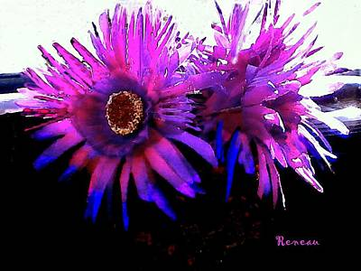 Photograph - Hot Pink Aster Flowers by Sadie Reneau