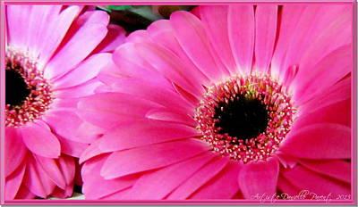 Hot Pink Gerber Daisies Macro Art Print
