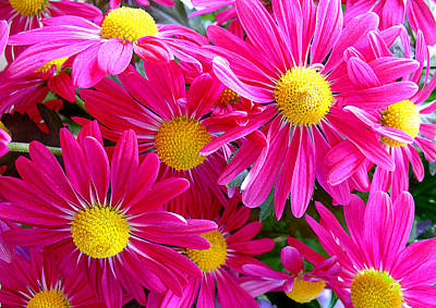 Fields Of Flowers Photograph - Hot Pink by Julie Palencia
