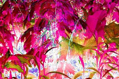 Photograph - Hot Pink Jungle by Marianne Dow