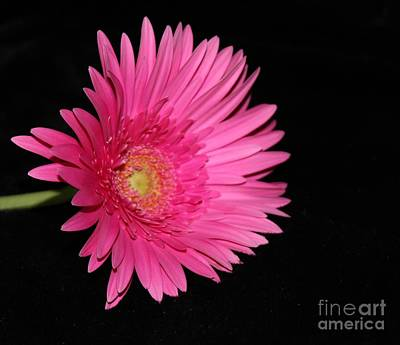 Photograph - Hot Pink by Margaret Hamilton