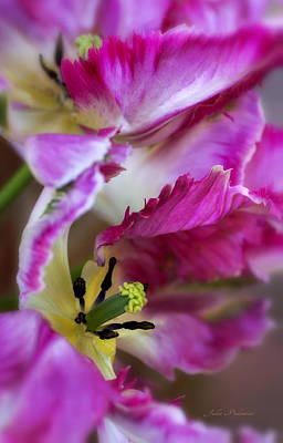 Photograph - Hot Pink Parrot Tulips by Julie Palencia