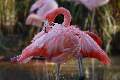 Photograph - Hot Pink by Patricia Dennis