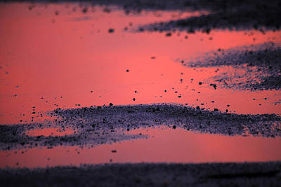 Photograph - Hot Pink Puddle by Karol Livote