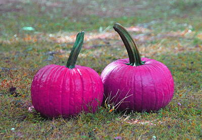 Christmas Photograph - Hot Pink Pumpkins by Cathy Lindsey