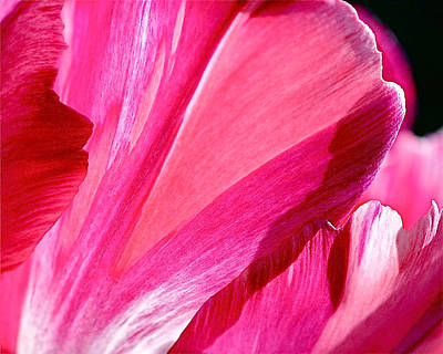 Spring Flowers Photograph - Hot Pink by Rona Black
