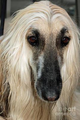 Digital Art - Hound Dog 3 by Eva Kaufman