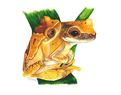 Hourglass Treefrog Original by Cindy Hitchcock